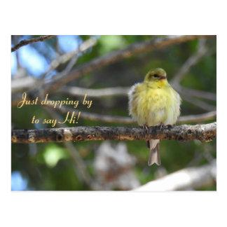 Hello, Hi, Bird-American Goldfinch Postcard