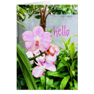 Hello Orchid Greeting Card