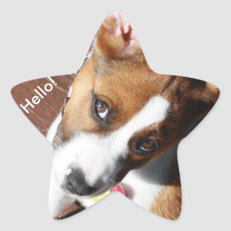 Hello pup! star sticker