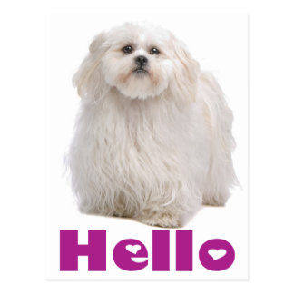 Hello Shih Tzu Puppy Dog Postcard