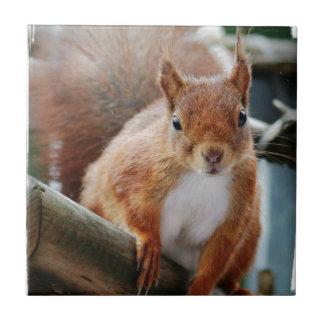 Hello Squirrel - Photography Jean Louis Glineur Small Square Tile