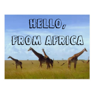 Hello with Love From Africa Hakuna Matata Postcard