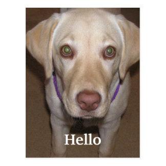 Hello Yellow Labrador Postcard