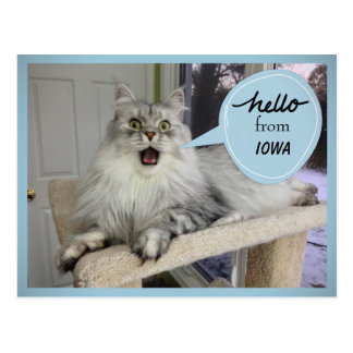 """""""Helloooo"""" from YOUR State Cat Postcard"""