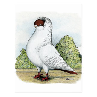 Helmet:  Red Pigeon Postcard