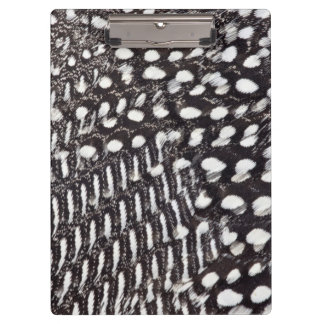 Helmeted Guinea fowl feather Clipboard