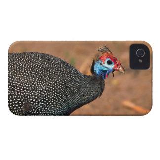 Helmeted Guinea Fowl (Numida meleagris). Africa, iPhone 4 Cases