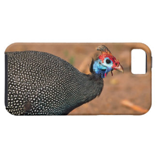 Helmeted Guinea Fowl (Numida meleagris). Africa, iPhone 5 Case