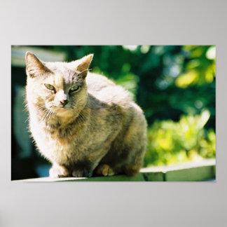 Hemingway Cat 3 - Poster & Print