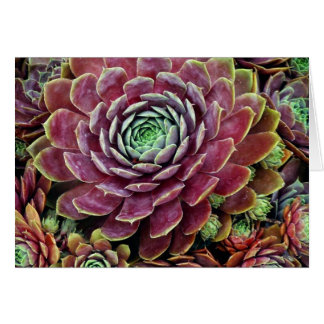 Hen And Chicks Card