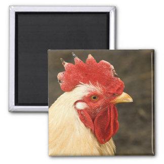 Hen Close-Up Square Magnet