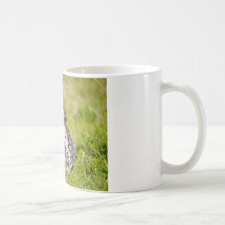 Hen lying in grass mug