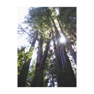 Henry Cowell Redwoods Canvas Print