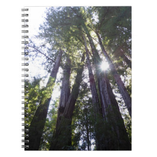 Henry Cowell Redwoods Spiral Notebook