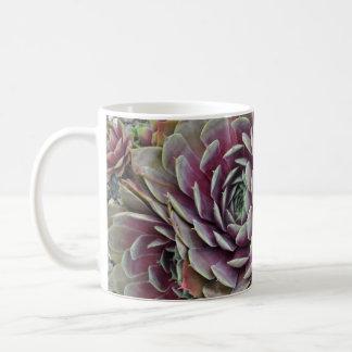 Hens and chicks cactus plant coffee mug