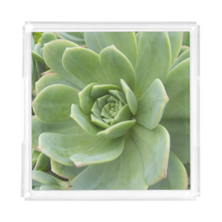 Hens and Chicks Plant Acrylic Tray