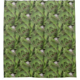 Hens And Chicks Succulents Nature Pattern Shower Curtain