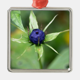 Herb paris (Paris quadrifolia) Metal Ornament