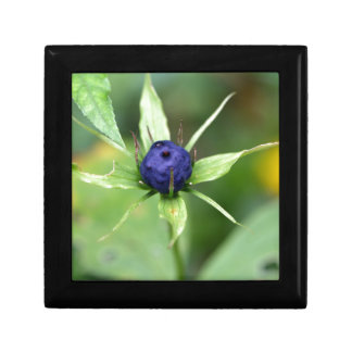 Herb paris (Paris quadrifolia) Small Square Gift Box