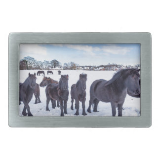 Herd of black frisian horses in winter snow belt buckle