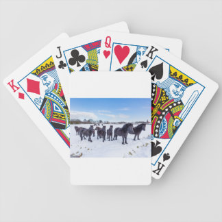 Herd of black frisian horses in winter snow bicycle playing cards
