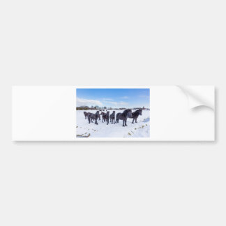 Herd of black frisian horses in winter snow bumper sticker