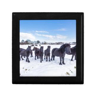 Herd of black frisian horses in winter snow gift box