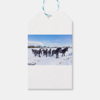 Herd of black frisian horses in winter snow gift tags