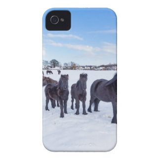 Herd of black frisian horses in winter snow iPhone 4 cover