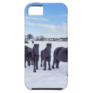 Herd of black frisian horses in winter snow iPhone 5 case