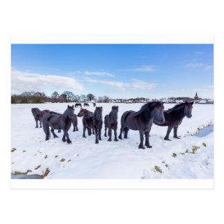 Herd of black frisian horses in winter snow postcard