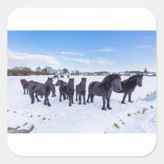 Herd of black frisian horses in winter snow square sticker