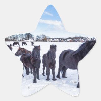 Herd of black frisian horses in winter snow star sticker