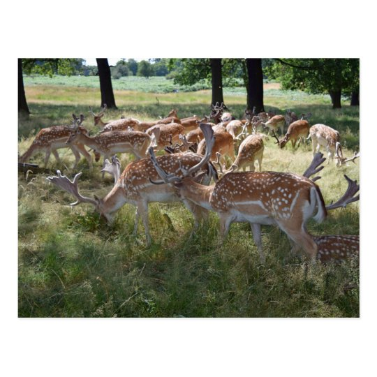 Herd of deer in a park postcard