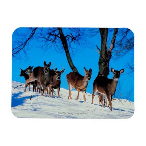 Herd of deer vinyl magnets