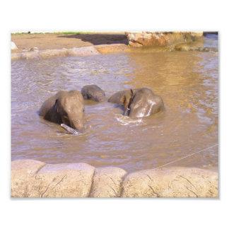 Herd of Elephants Photo Print