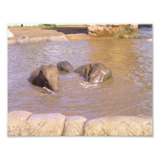 Herd of Elephants Photographic Print