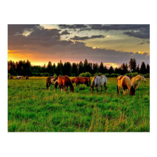 Herd of horses postcard