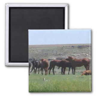 Herd of Horses & Prairie Dog - Logan County KS Magnet