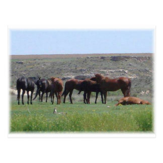 Herd of Horses & Prairie Dog - Logan County KS Postcard