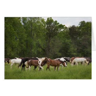 Herd of horses, Tennessee Card