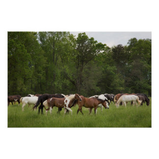 Herd of horses, Tennessee Poster