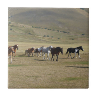 Herd of Horses Tile