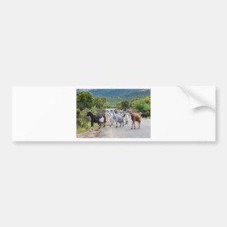 Herd of mountain goats walking on road bumper sticker