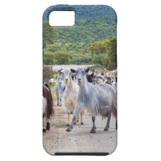 Herd of mountain goats walking on road iPhone 5 cover