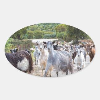 Herd of mountain goats walking on road oval sticker