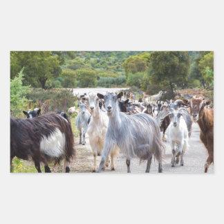 Herd of mountain goats walking on road rectangular sticker