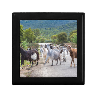 Herd of mountain goats walking on road small square gift box