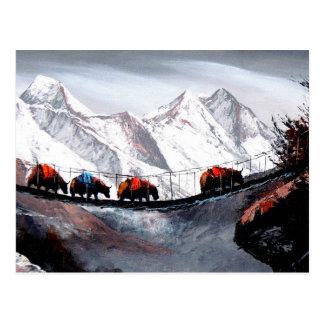 Herd Of Mountain Yaks Himalaya Postcard