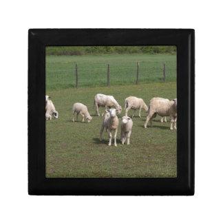 Herd of sheep gift box